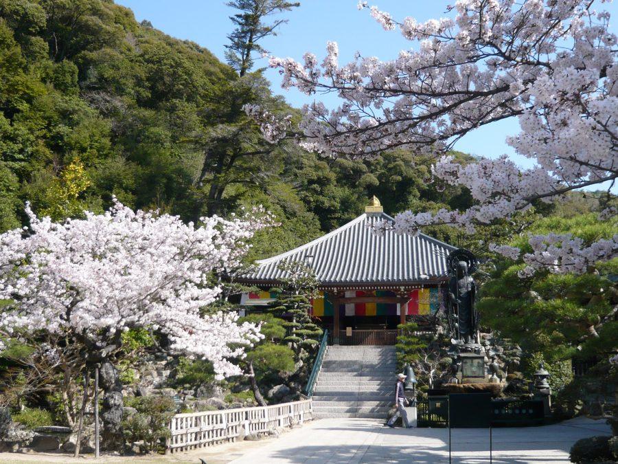 本堂、一願地蔵尊と桜