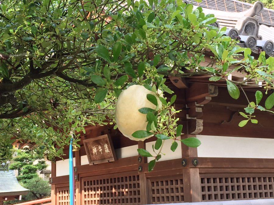 木の枝の泡状の卵