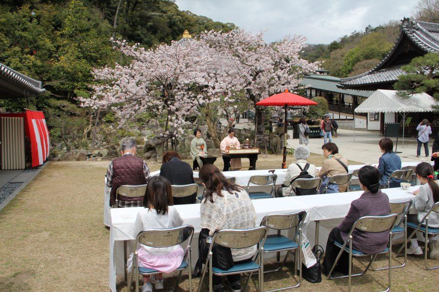 満開の桜でのお茶会