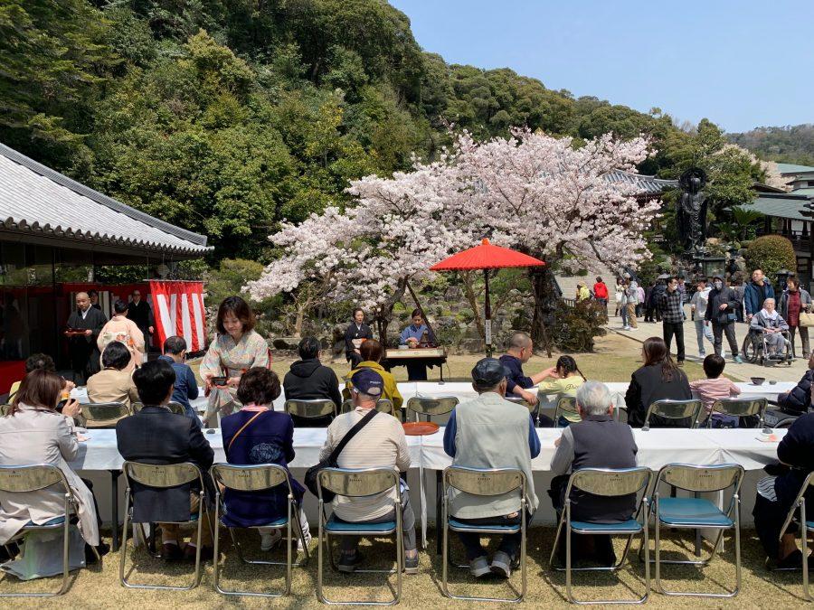 青空と桜の下のお茶席