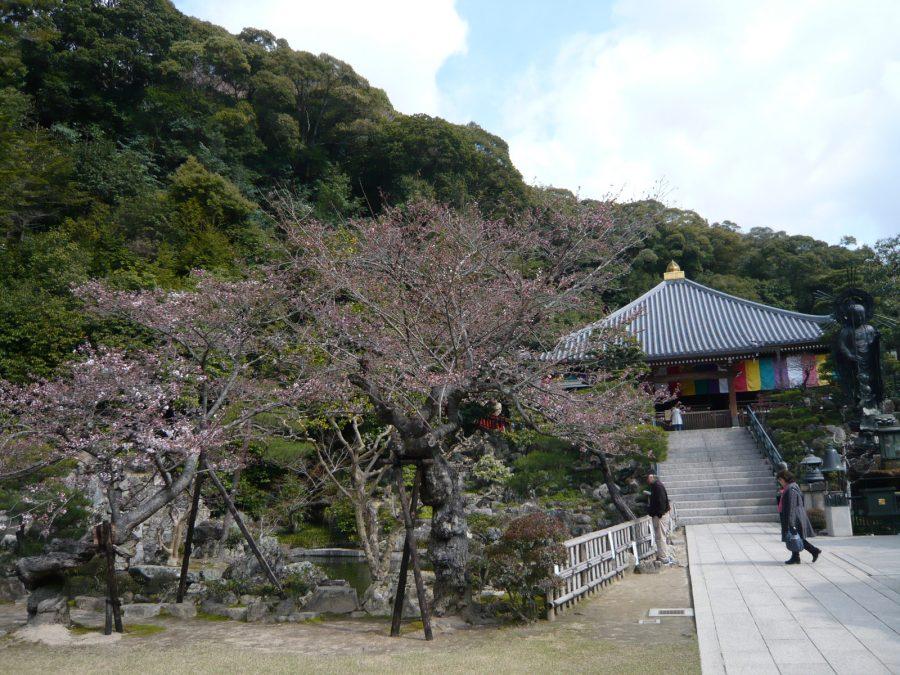史料館の桜